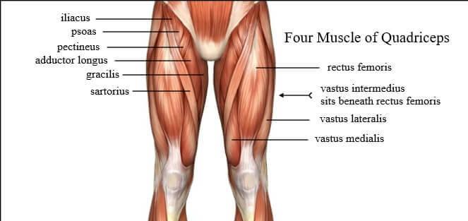 Muschii cvadricepsului