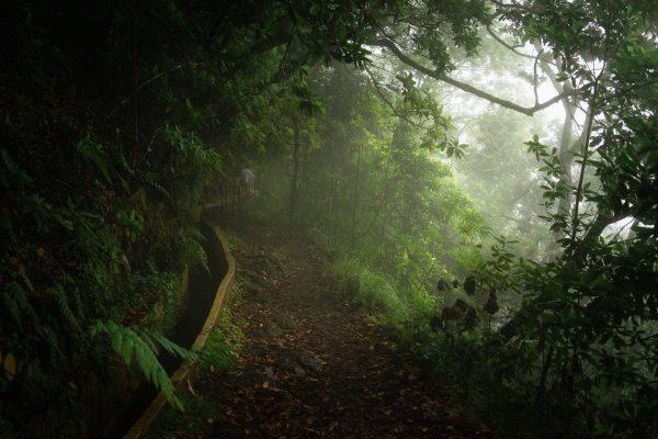 Levadas - 10 locuri de vizitat in MADEIRA - TrailRunningAcademy.com